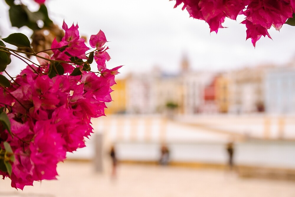 Seville - Flowers and Calle Betis by Andrea Mazzocchetti