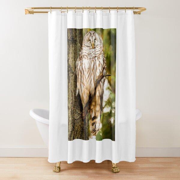 Smug barred owl Shower Curtain