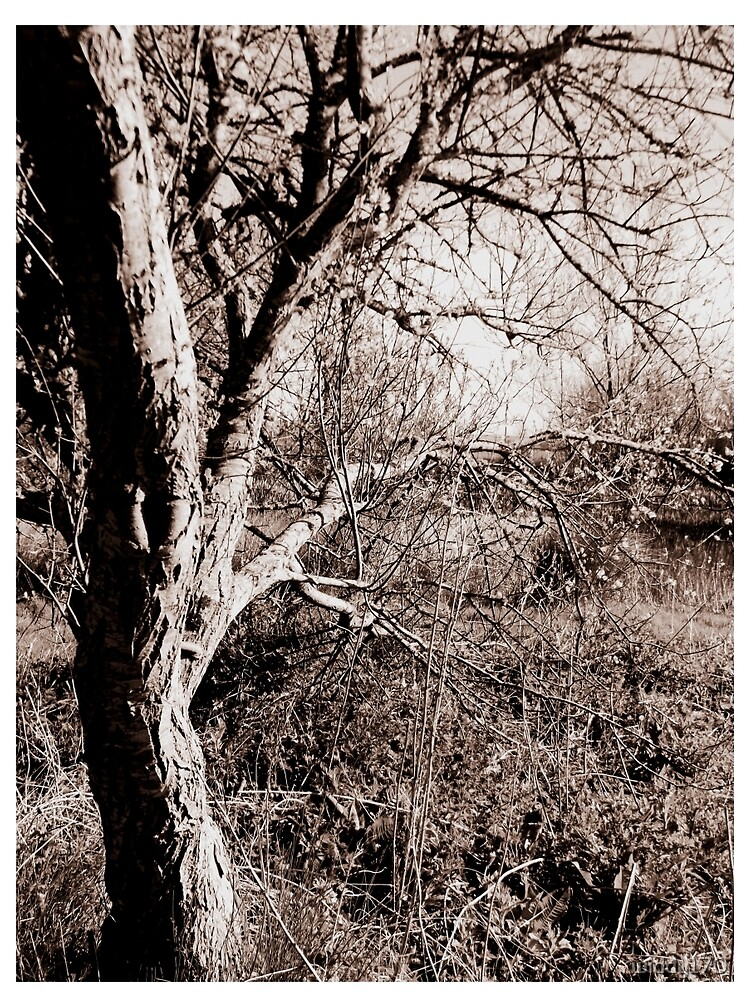 Old tree by the lake  by widdy170