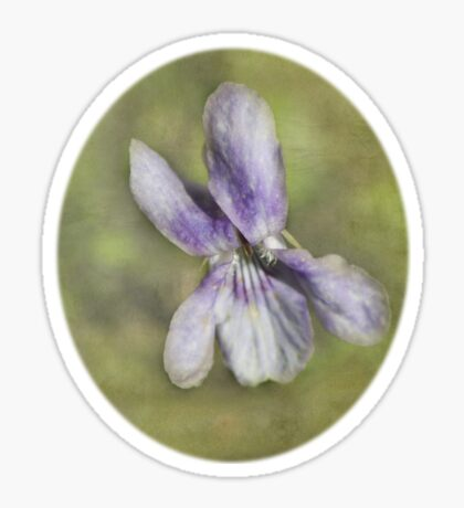 Sweet Wood Violet Sticker