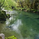 Springtime greenery along Semine river by Patrick Morand