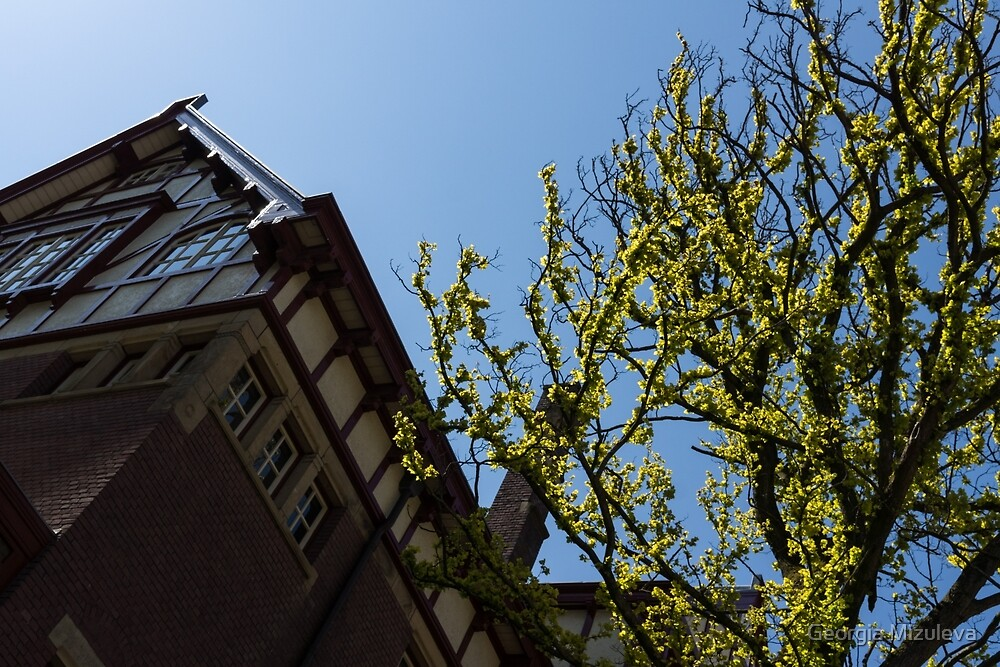 Amsterdam Spring - Characteristic Facade Plus Unusual Tree - Right by Georgia Mizuleva