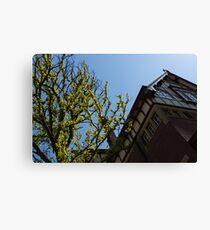 Amsterdam Spring - Characteristic Facade Plus Unusual Tree - Left Canvas Print