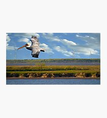 Pelican with Wind Turbines Photographic Print