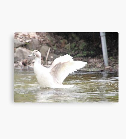 White Female Duck Canvas Print