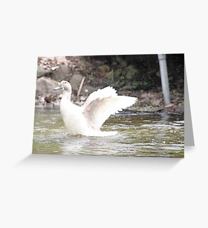 White Female Duck Greeting Card