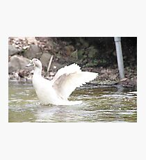 White Female Duck Photographic Print