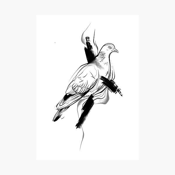 Pigeon II Photographic Print