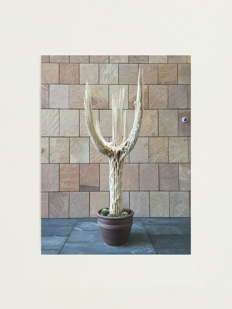 Alternate view of 2016 Cactus Skelleton Photographic Print
