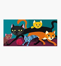 Cats & Kittens Photographic Print