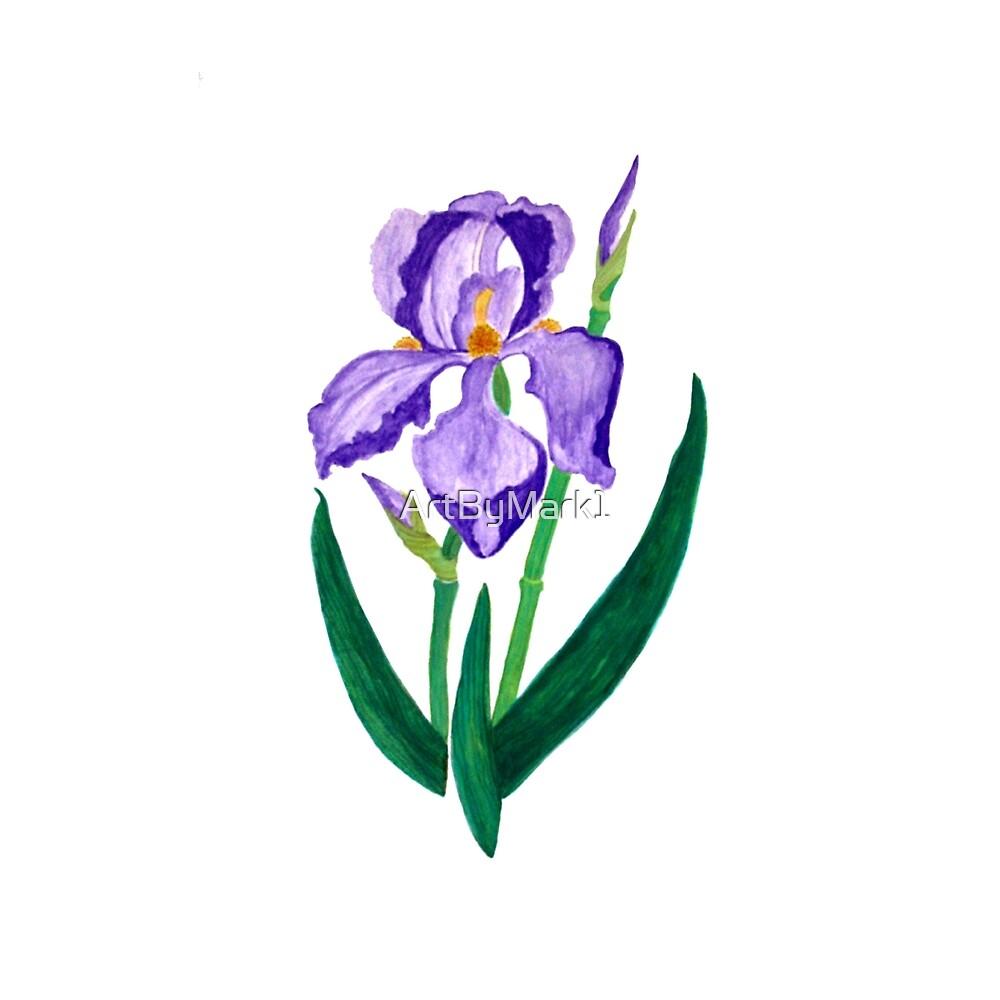 Purple Iris by ArtByMark1