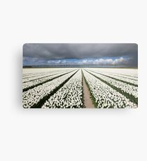 Tulips before the storm Metal Print