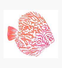 Discus fish Photographic Print