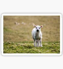 Donegal Lamb Sticker