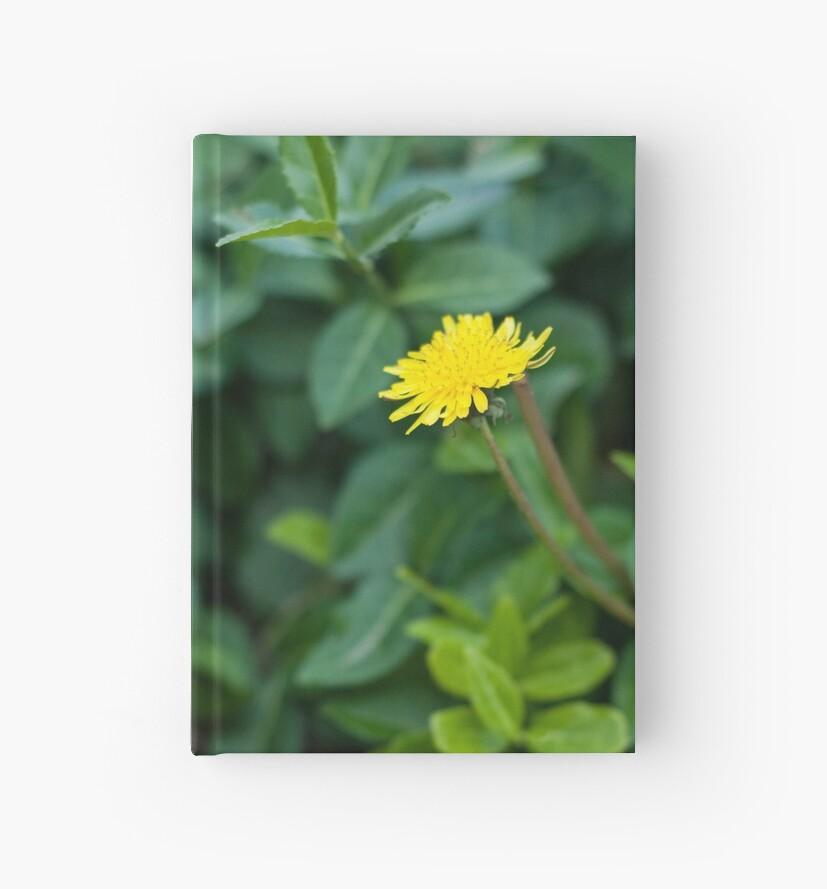 A Dandelion in the Spring by wonderkay