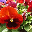 Colorful Flower Close-Up, Jersey City, New Jersey by lenspiro