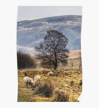 Grazing Peacefully Poster