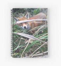 Fox at Royal National Park Sydney Spiral Notebook
