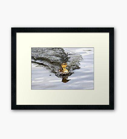 Racing Duckie Framed Print