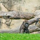 Baby Gorilla by Imagery