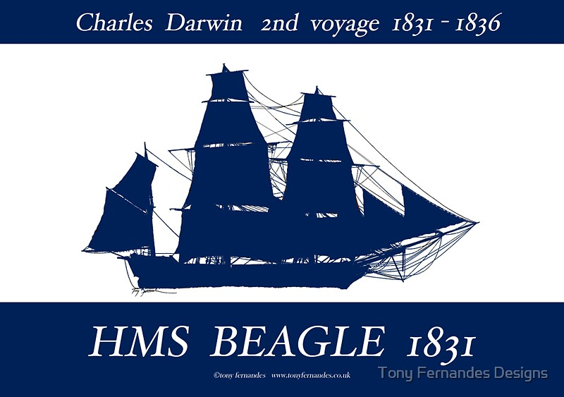 a report on charles darwin and his mission on the hms beagle Start studying charles darwin learn vocabulary  it was a detailed report and explanation of his findings while on the hms zoology of the voyage of fhe beagle.