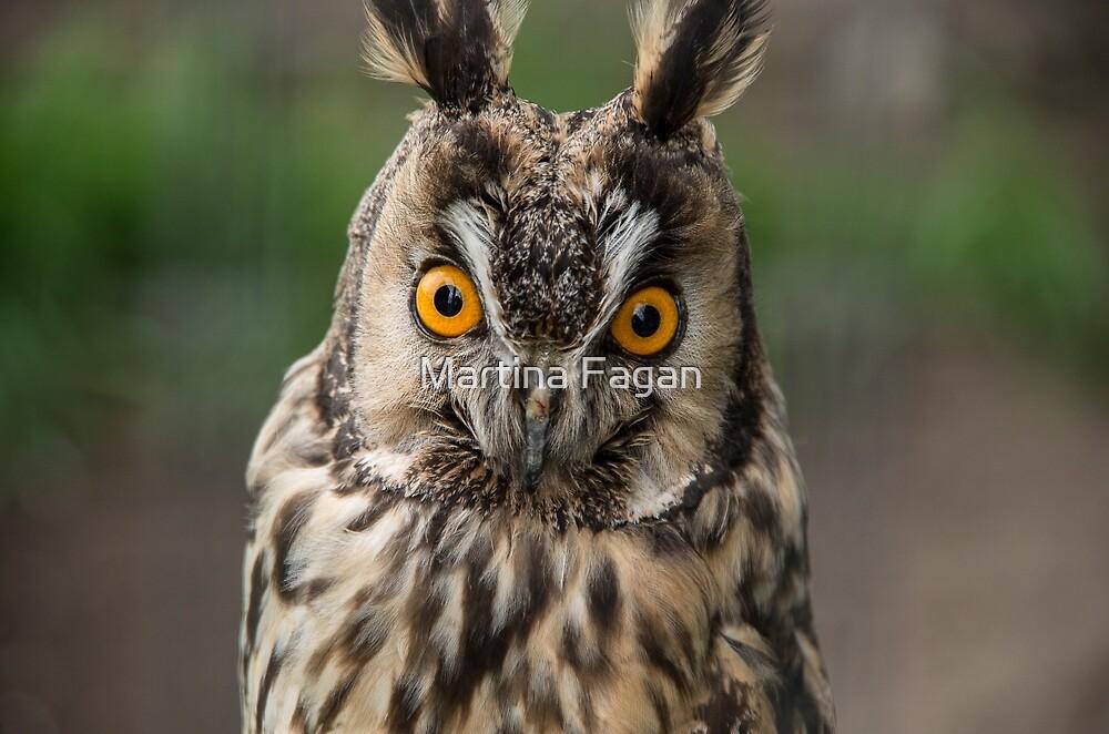Long-Eared Owl by Martina Fagan