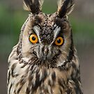 Long-Eared Owl by Martina Fagan