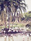 Flamingo Island by Beth Thompson