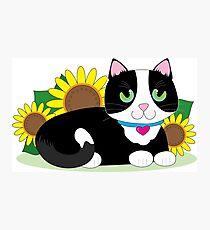 Tuxedo Cat Photographic Print