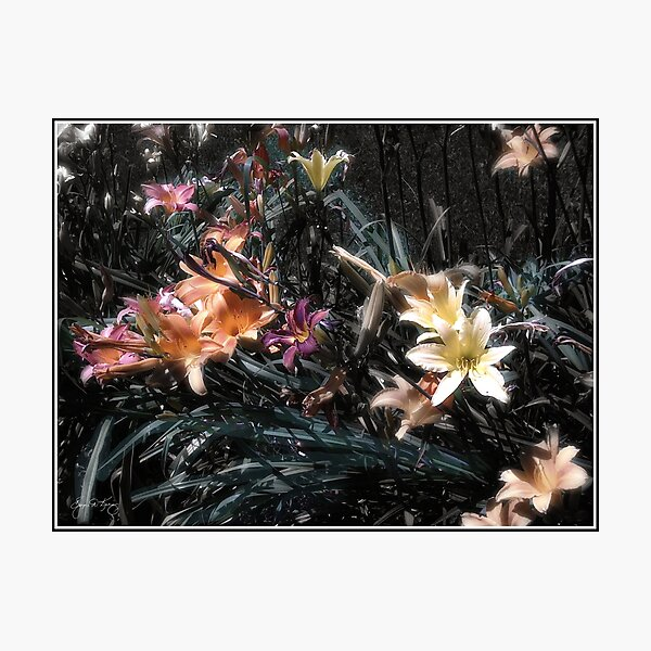 Painted Lilies Photographic Print