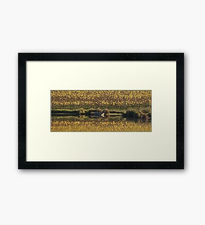 Peaceful Country Victoria Framed Print