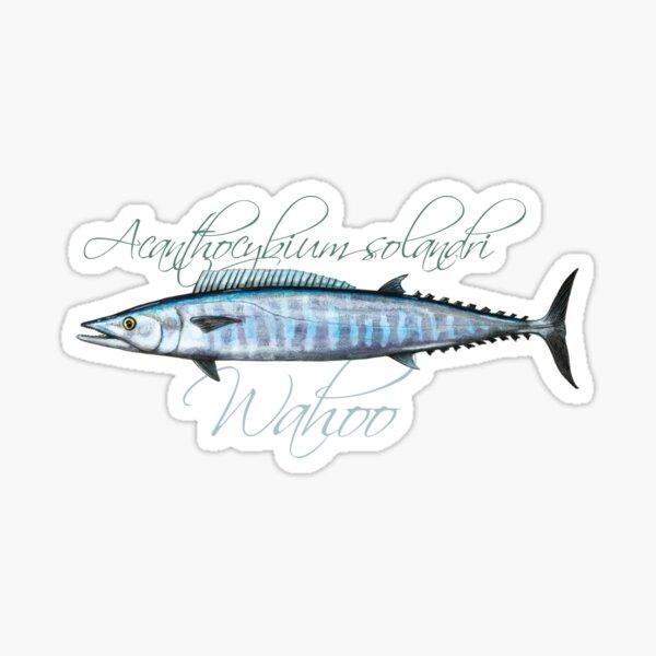 Wahoo · Acanthocybium solandri Sticker