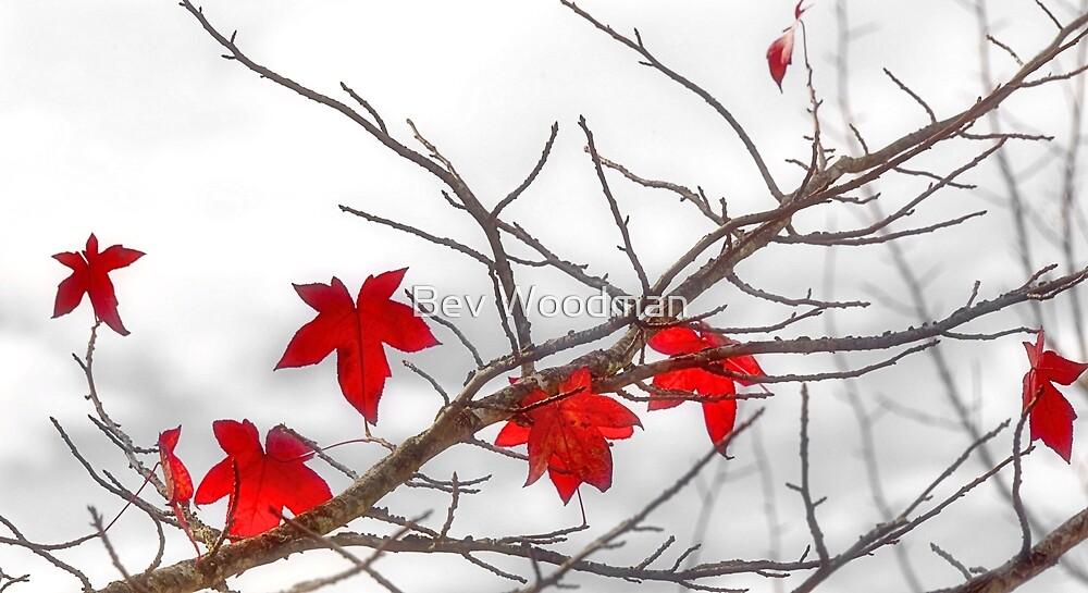 AUTUMN RED by Bev Woodman