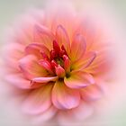 Dahlia Beauty by Bev Woodman