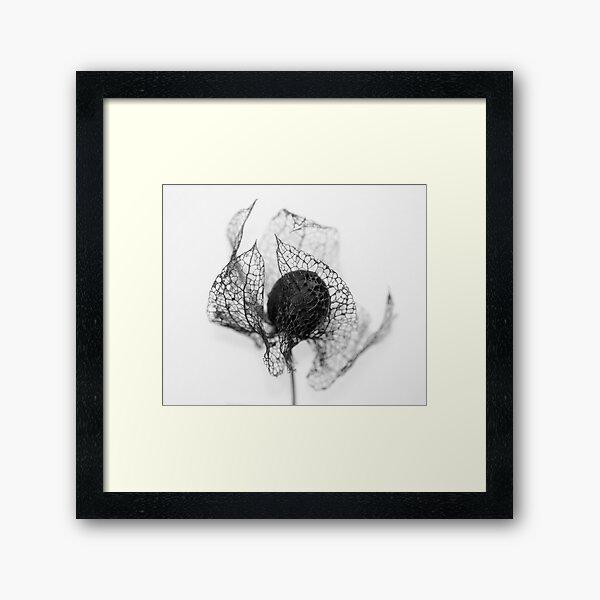 Protection ~ Seedhead  - JUSTART © Framed Art Print