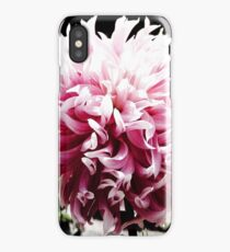 Pink Dancing Dahlia iPhone Case/Skin