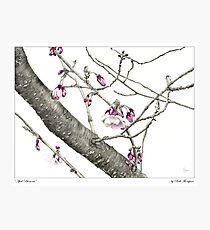 April Blossoms Photographic Print