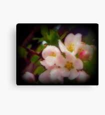 Colorful Spring Time Blooms Canvas Print