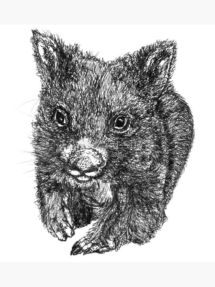 Bill the Baby Wombat by Wildcard-Sue