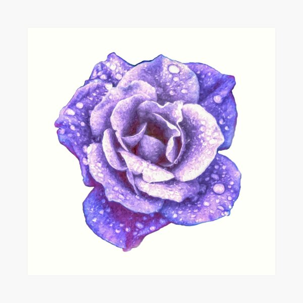 Midnight Purple Rose with Raindrops Art Print