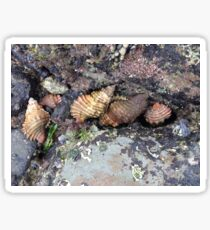 Shells in a tidal pool Sticker