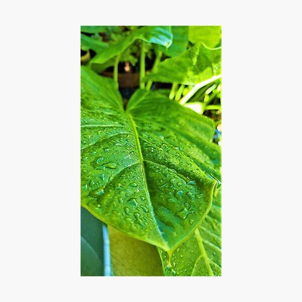 Deep Green Leaf Photographic Print