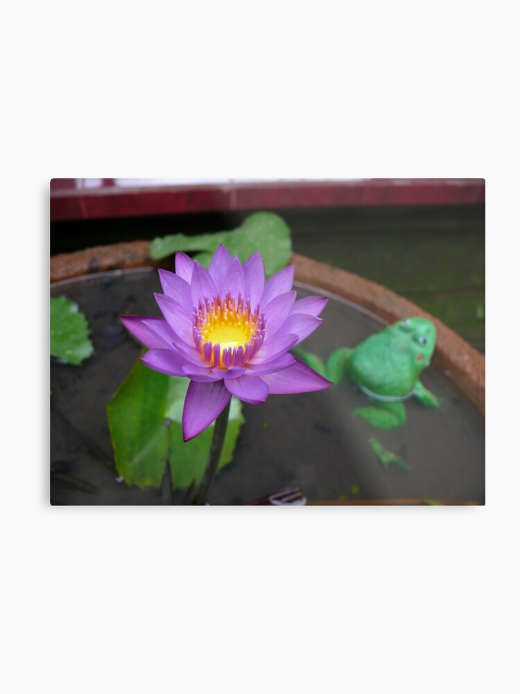 Real Lotus Flower Fake Frog Metal Print By Saltymontana Redbubble