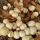 A Pile of Puffballs by Kat Simmons