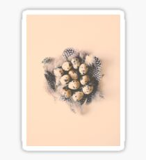 quail eggs nest Sticker