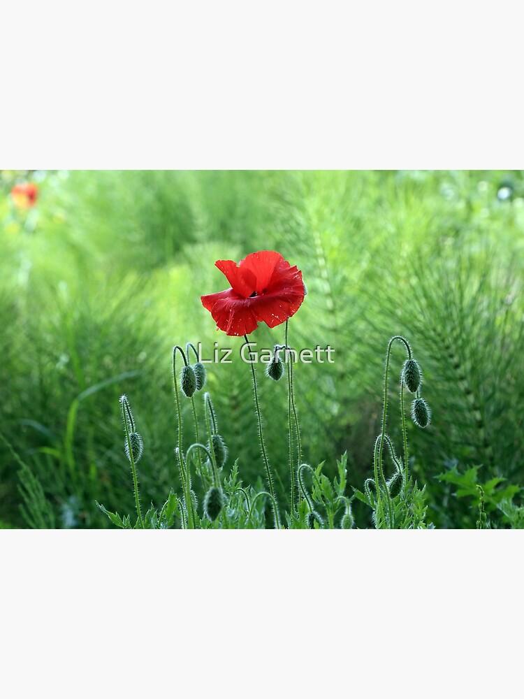 www.lizgarnett.com - Kent Poppy 1 by lizgarnett
