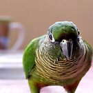 Mischievious Echo - Maroon-Bellied Conure by AndreaEL