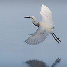 Little egret.  by DaveBassett