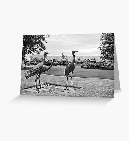Brolgas—Government House Tasmania Greeting Card
