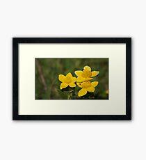 #flower  Framed Print